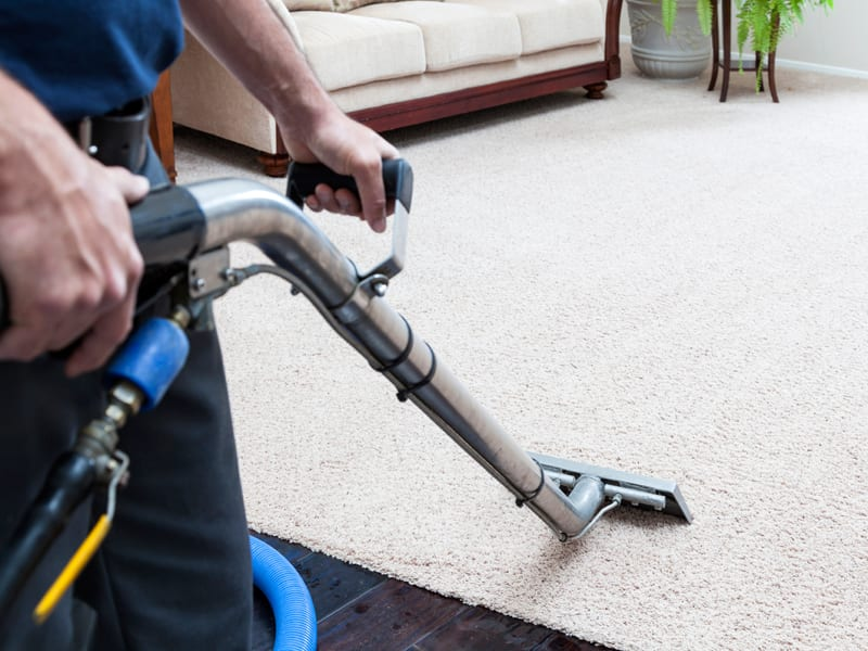 Professional Carpet Cleaning Company TMG Cleaning Services