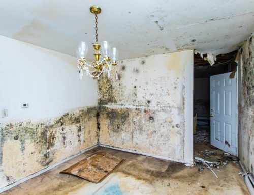 Where Mold Grows In Your Home | TMG Companies